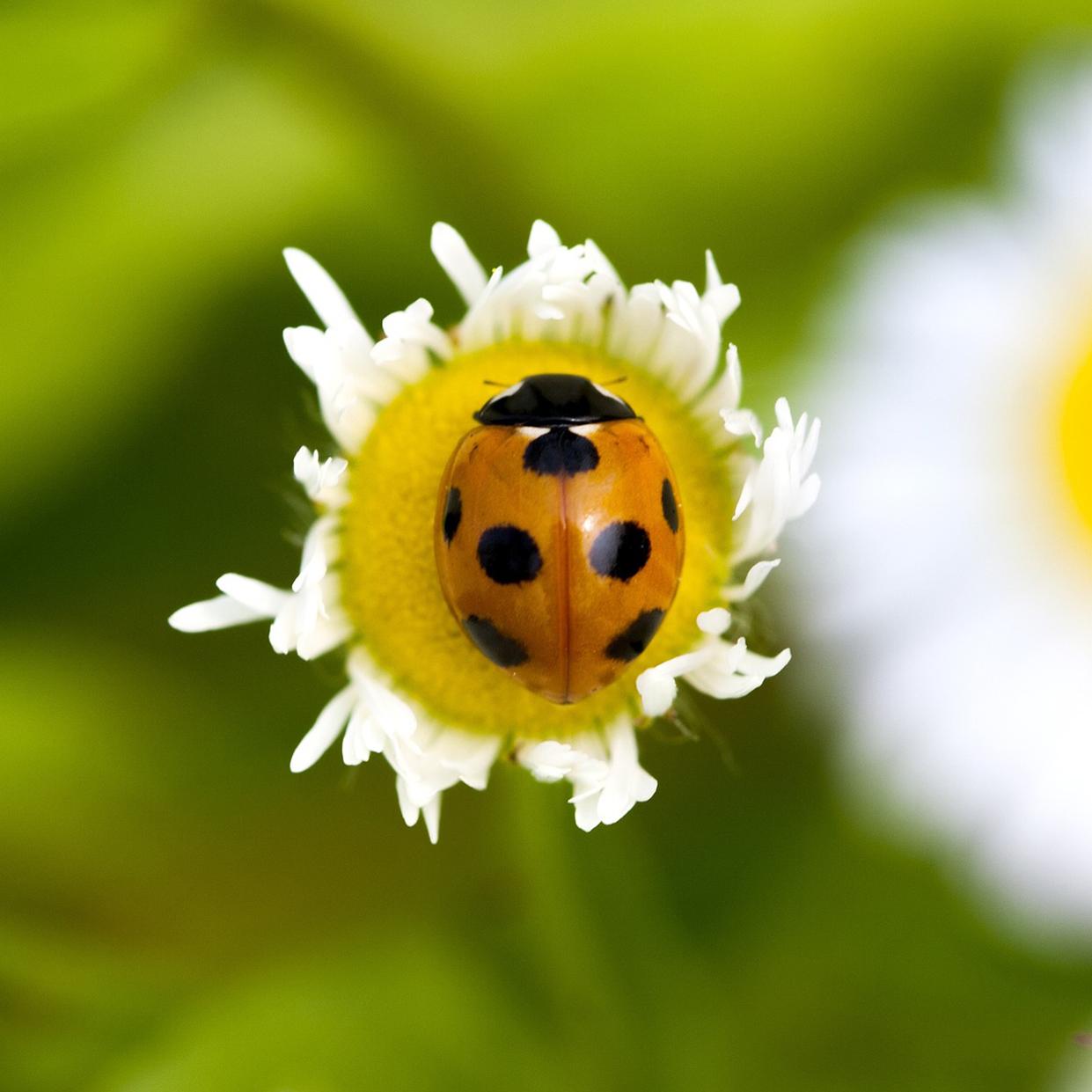 bedbugs, bugs